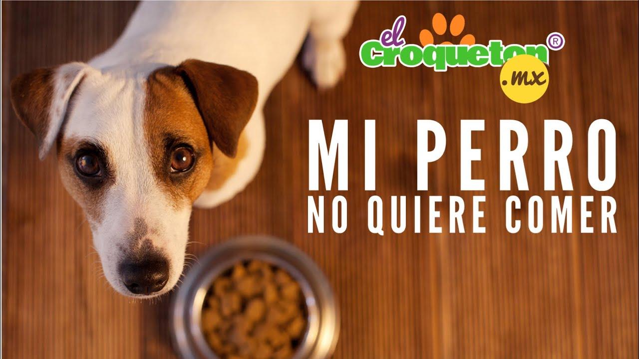 Pastillas para abrir apetito perros