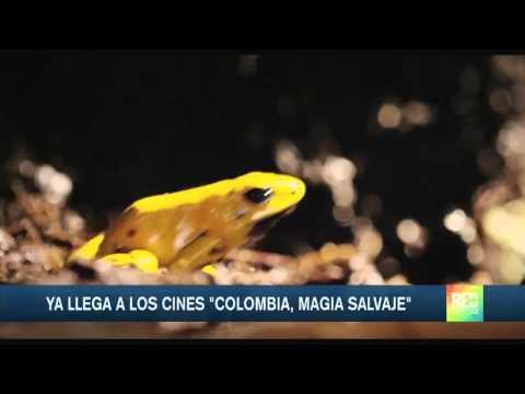 Documental Colombia Magia Salvaje llegó al cine