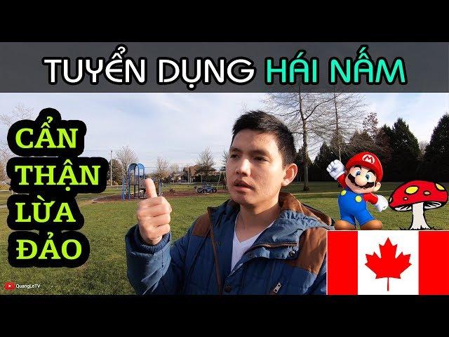 TUYỂN DỤNG XKLD HÁI NẤM Ở CANADA - CẨN THẬN BỊ LỪA ĐẢO