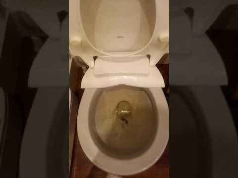 squid gets flushed down