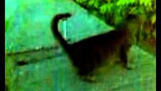 Кошка-скорпион.mp4