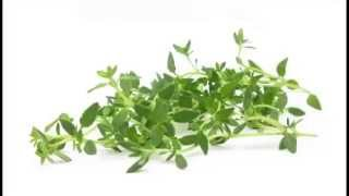 Thyme Herb & Its Health Benefits