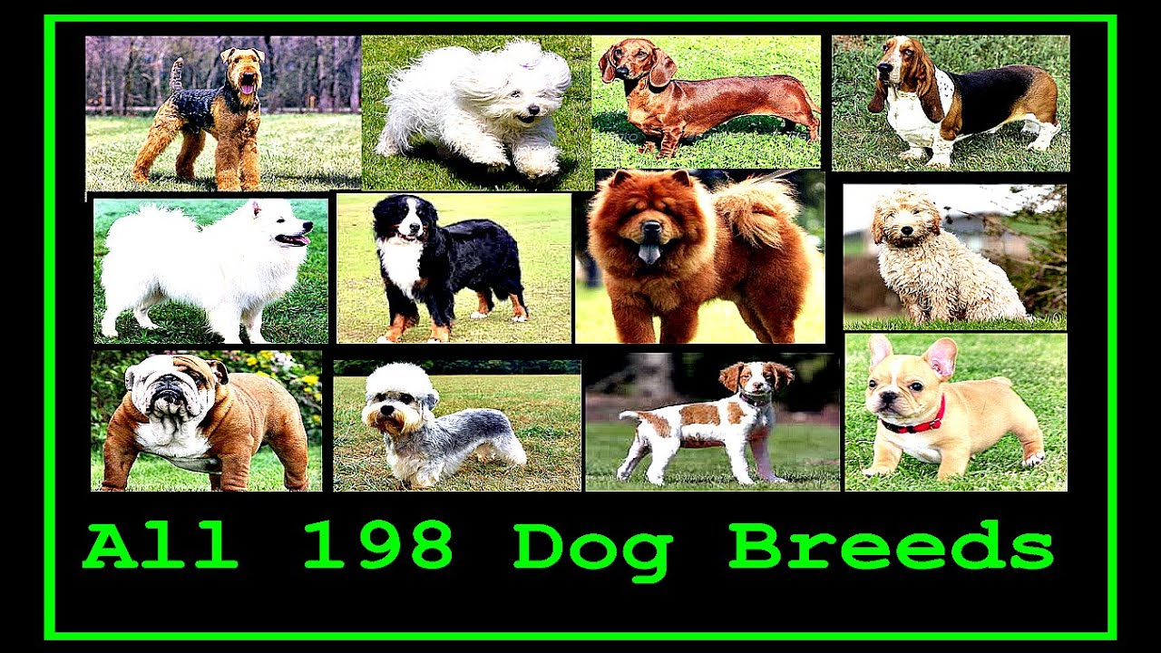 Every Dog Breed Az