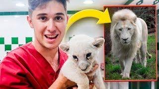 CONOZCO A DOS TIGRES Y A CACHORROS DE LEÓN!! **ZOOLÓGICO DE ANIMALES EXÓTICOS** [Shooter]