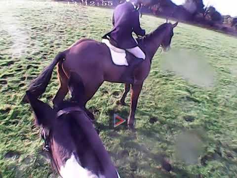 North Galway Hunt- Cumer