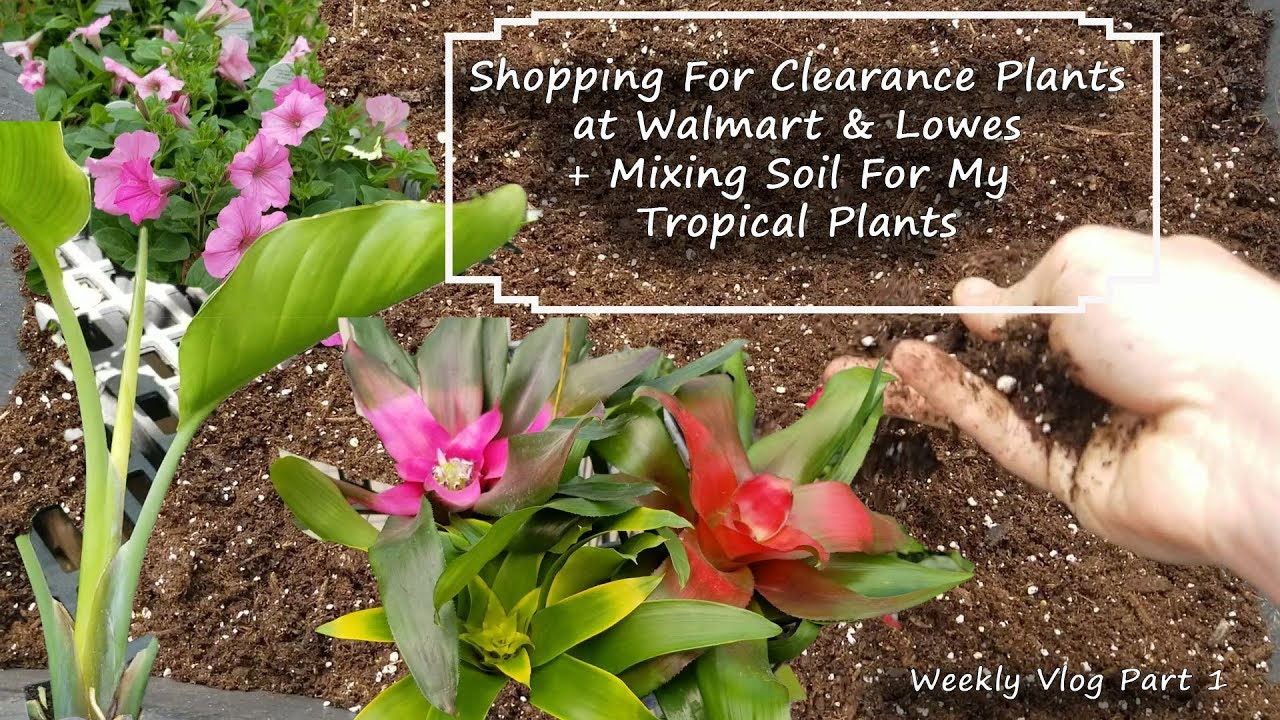 Shopping For Clearance Plants At Walmart & Lowes || Mixing Soil || Petunias  || Part 1