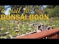 Visit to Boon's Bonsai Nursery