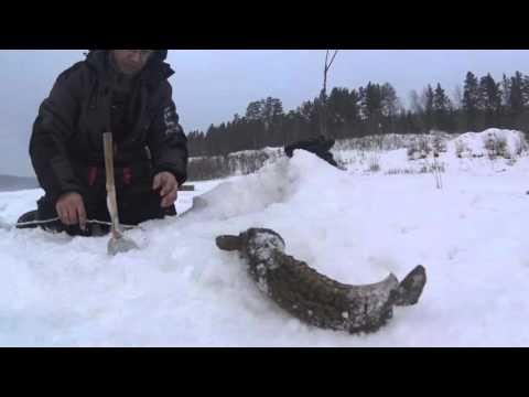 рыбалка налима в иркутской области