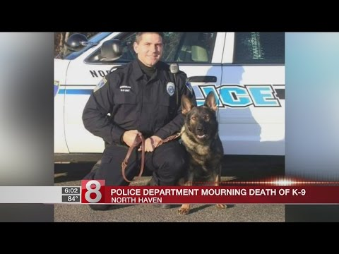 North Haven PD mourns loss of K9 officer