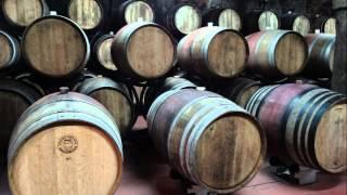Vinska klet Ptuj, biser vinske tradicije na Slovenskem