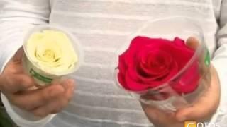 видео Купить замороженный шиповник оптом по цене производителя
