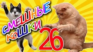 Смешные кошки 26 ● Приколы с животными 2015 - коты ●  Funny cats vine compilation - Part 26