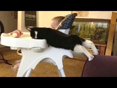 ANIMALS SO FUNNY that they will BLOW YOUR MIND! - Super FUNNY ANIMAL videos