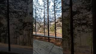 편백나무숲!!!!2