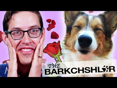 Keith Challenges 25 Dogs To Recreate The Bachelor