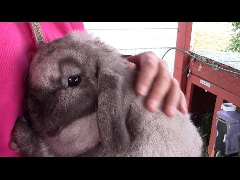 Breeding Our Holland Lop Rabbits | Vlogmas Day 2 2018