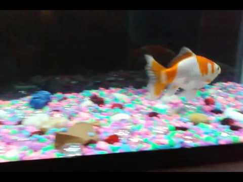 Fish Eats Rocks And Spits Them Out