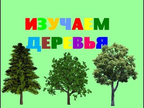 Изучаем деревья с ребенком в картинках. Виды деревьев. Карточки Домана. Обучающее видео для малышей