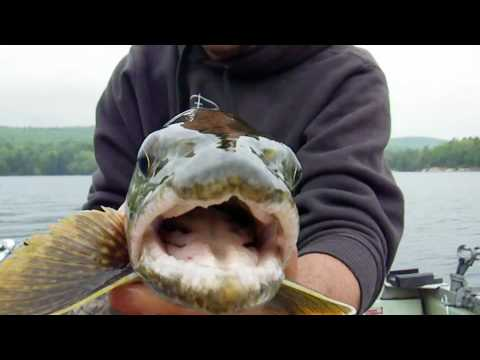 Lake Trout at Quabbin Reservoir