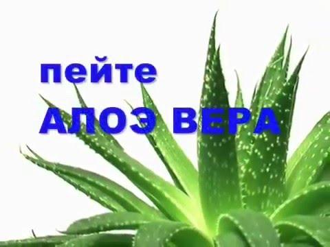 Сок Алоэ Гербалайф Ново Лайф Похудеть Коррекция веса