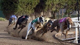 ドッグレースで競技場を駆け抜けた犬たちが引退する日【涙腺崩壊】