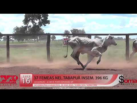 LOTE 16