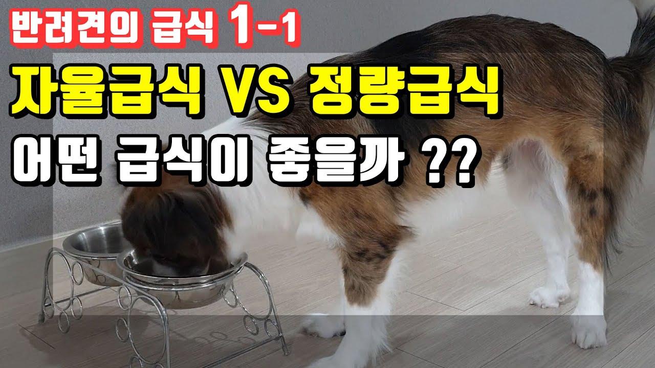 강아지 사료 어떻게 줘야 할까?? 자율급식 vs 정량급식 어떤 것이 좋을까요??