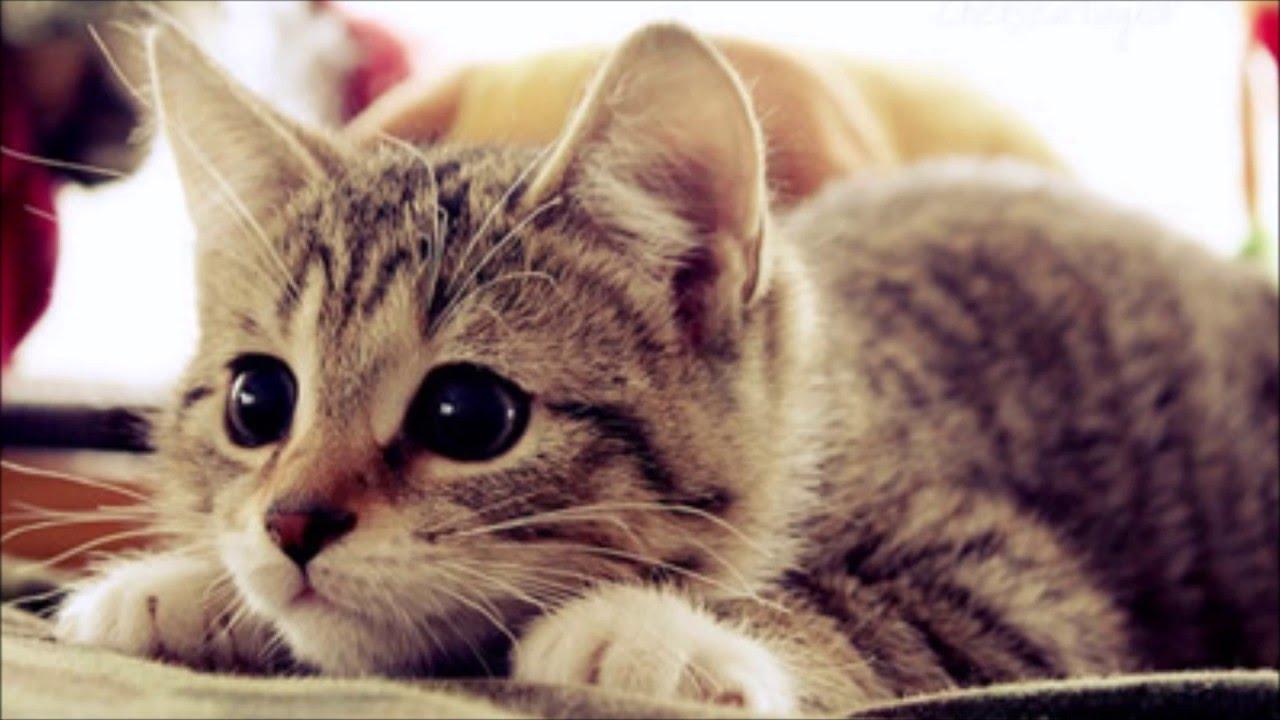 TOP 10: Gatos Mais Fofos Do Mundo!!!