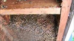 Bee Removal Glenville, NY ( Schenectady County, NY )