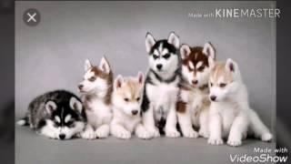 Самые красивые породы собак в мире)))