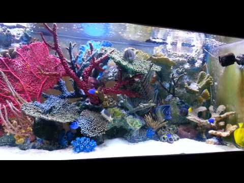 2013 My 220 gallons saltwater fish tank.