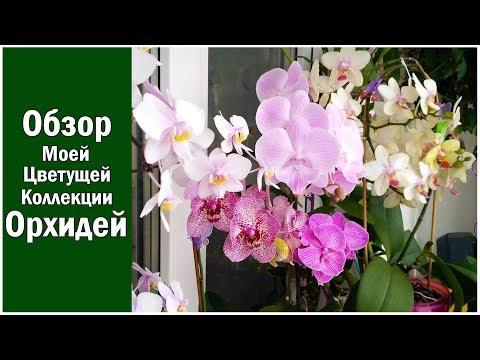 Обзор цветущих орхидеи коллекция, Филадельфия, Пафиопедилум, Биг Лип, Ванда, Вивьен и другие!