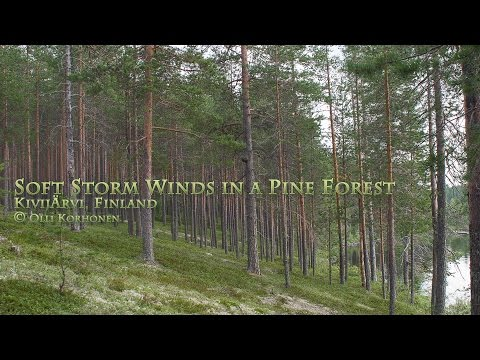 Soft Relaxing Wind Sound in a Forest – Bruit Blanc du Vent D
