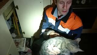Бенгальский кот в вентиляции.