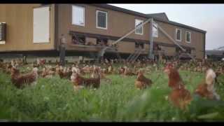 Mobiler Hühnerstall von Steiner automation