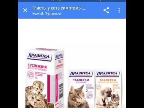 Запоры у кошек и методы борьбы с ними.