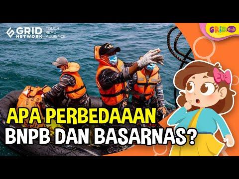 Selalu Diandalkan Dalam Bencana, Apa Perbedaan BNPB Dengan BASARNAS?