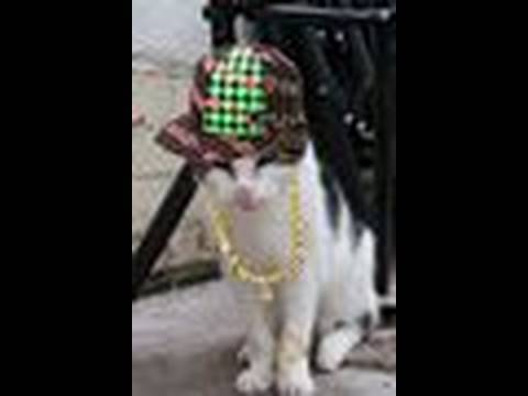 Tiggy the Talking cat Rapping Dance Hello Re-mix