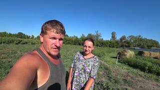 Деревенские будни - Начали коровник ремонтировать. Телят на улицу, коров в электропастух