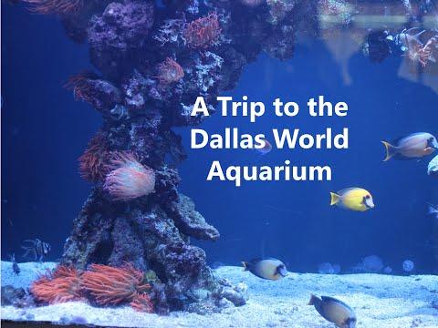 Dallass Aquarium