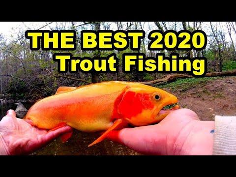 MASSIVE RAINBOW And PALOMINO TROUT! Pennsylvania Fishing Season 2020.