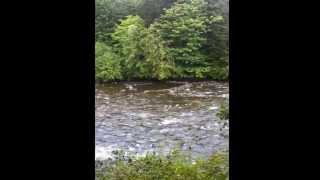 River House Rare, Riverfront Home For Sale Courtenay Bc