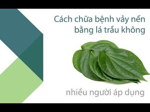 cách chữa bệnh vảy nến bằng lá trầu không cực tốt