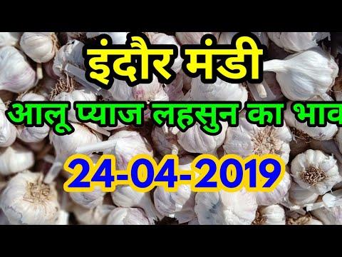 इंदौर मंडी के आलू प्याज लहसुन का भाव इस प्रकार रहा।Indore Mandi aalu pyaj or lahsun bhav 24-04-19