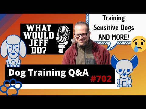 dog-training-q&a---training-sensitive-dogs---what-would-jeff-do?-ep.702-(2020)