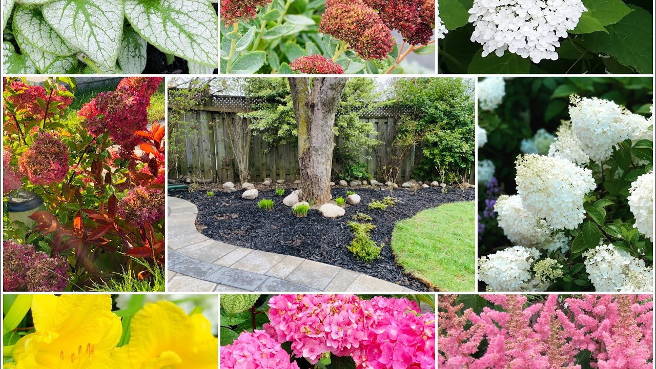 Tony's Garden Makeover Part 2: Dividing Hydrangea & Perennial + Rooting Hydrangea Cutting