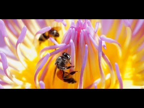 The truth about local honey and allergies