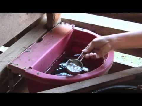 Auto Waterers Vs. Buckets