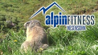 Tiere der Alpen #2 / Animals of the Alps #2 (1/2014)