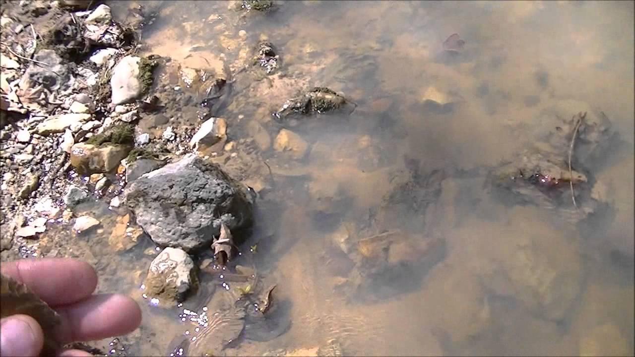 Creek hunting arrowheads youtube for Buy missouri fishing license online